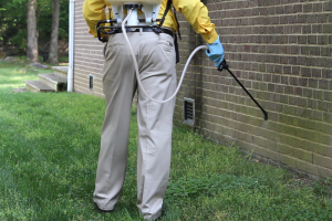 Choosing Pest Control Services for complete safety