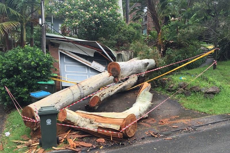 Vital Attributes That Define The Competency Of The Tree Removal Penrith Service