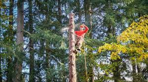 The Right Time To Give An Experienced Arborist A Call