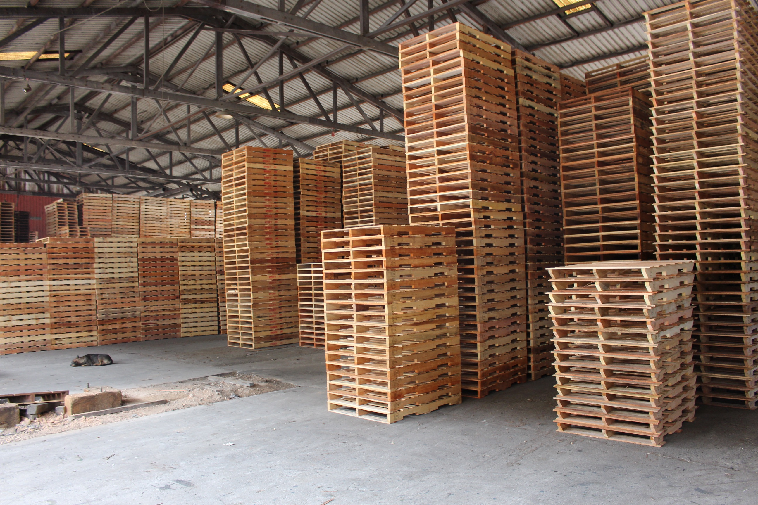 Why Second-Hand Pallets Have Become A Hit In Sydney